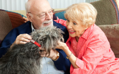 Pets and Seniors