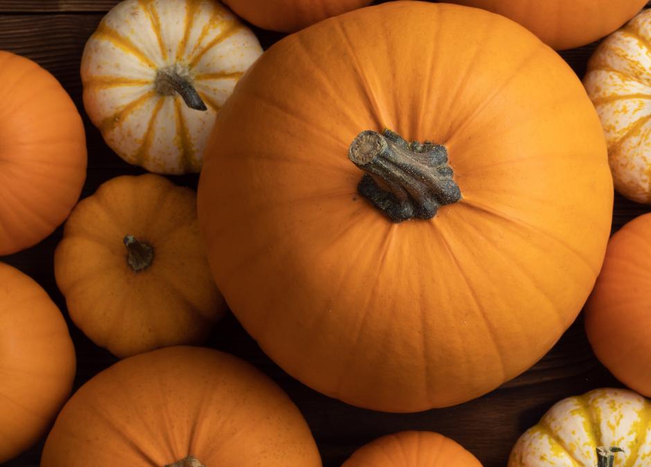 Your Pumpkin Has Italian Jewish Roots!