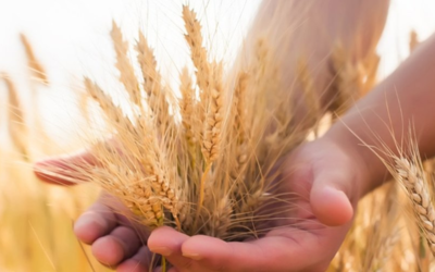 How to Make Shavuot at Home